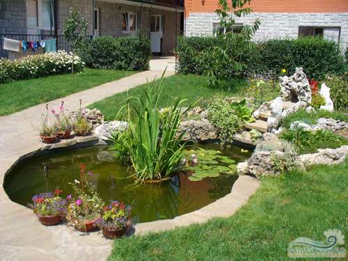 Hotel Edem: pond on the territory