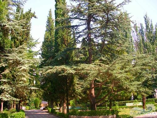 Alushtinsky Sanatorium: Park