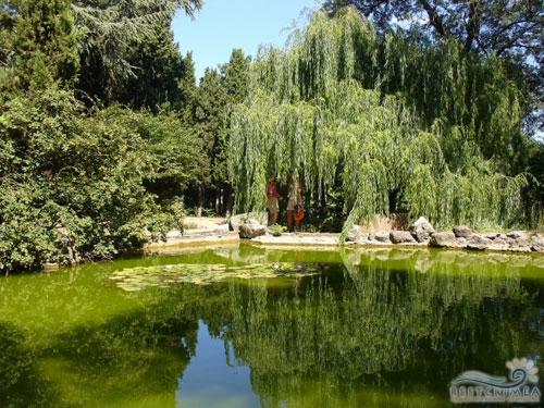 Санаторий Россия: парк